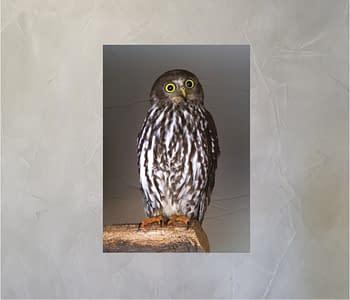 dobra - Lambe Autoadesivo - Owl's piercing eyes