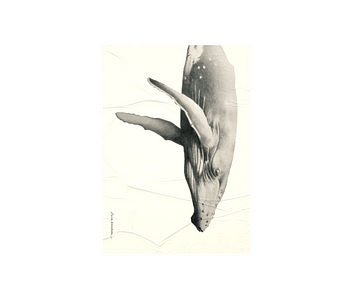 dobra - Lambe Autoadesivo - I wish I was a whale