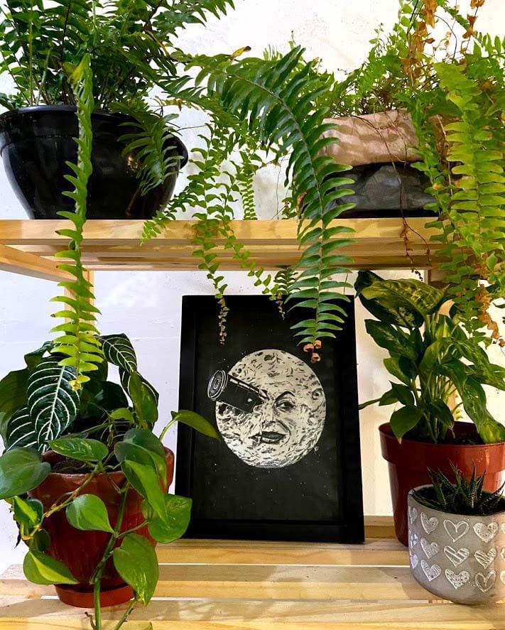 foto quadro lua no meio plantas
