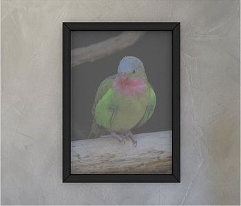 dobra - Quadro - The colourful princess parrot