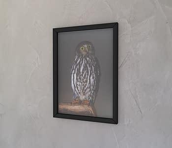 dobra - Quadro - Owl's piercing eyes